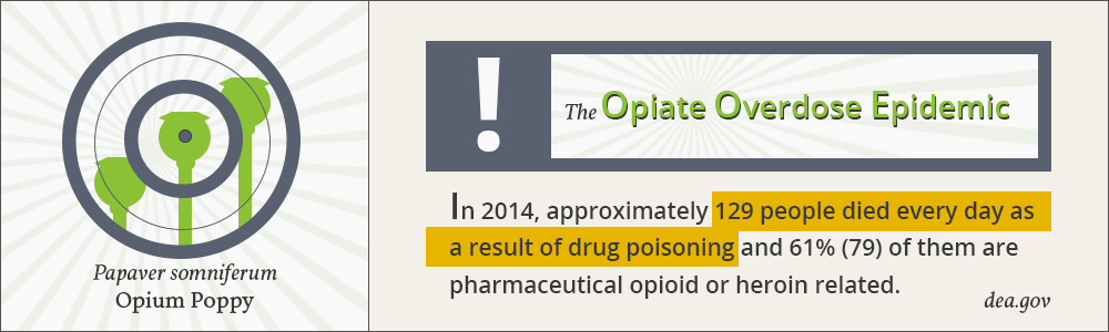 Infographic of the opiate overdose epidemic